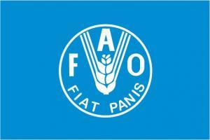 Флаг Организации Продовольственная и сельскохозяйственная организация ООН